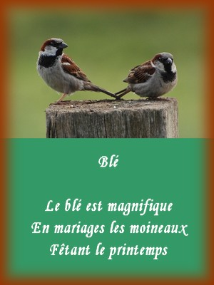 Haikus de la nature