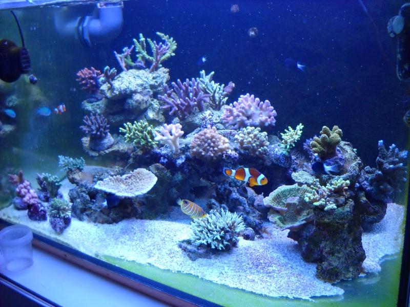 Demenager un aquarium eau de mer for Aquarium de mer