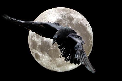 Soirée de Corbeau corbea10