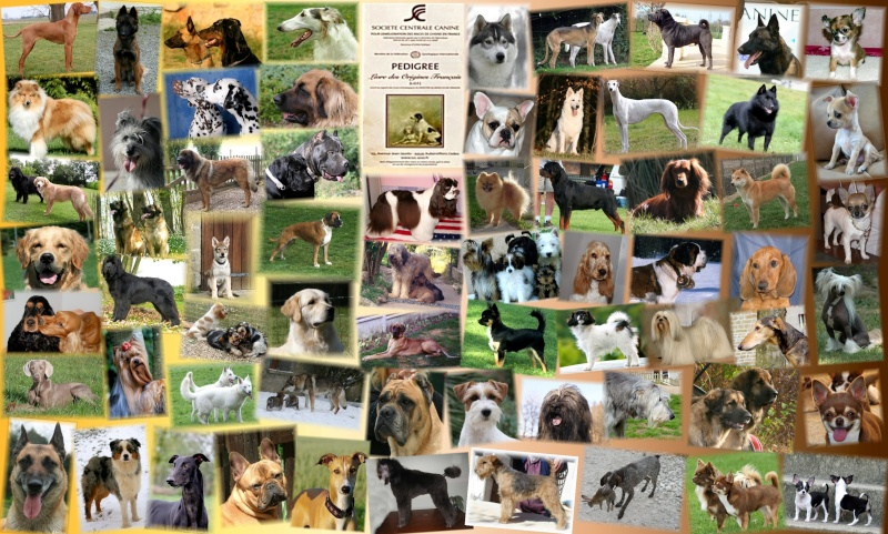 Communaut� Eleveurs canins  Pures Races
