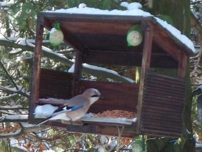 Reconnaitre les oiseaux de nos jardins page 2 for Oiseaux de belgique reconnaitre