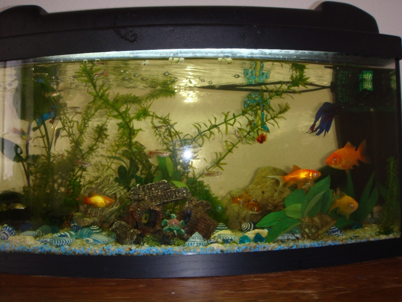 Concours de l 39 aquarium le plus laid page 9 aquariums for Image aquarium poisson rouge