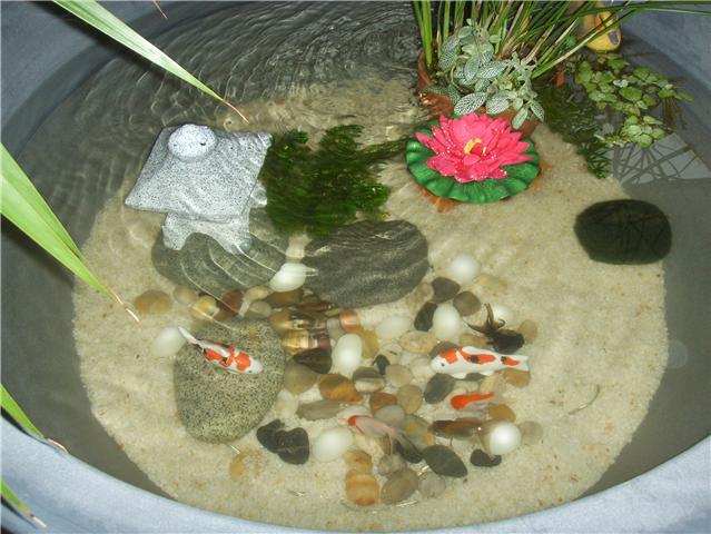 Poisson rouge et taches noires sur les opercules for Poisson rouge aquarium ou bassin