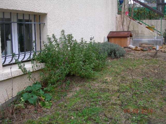 quand planter le melange de graine special tortue. Black Bedroom Furniture Sets. Home Design Ideas