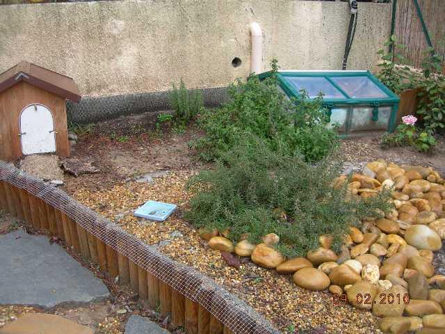 Quand planter le melange de graine special tortue - Quand planter la lavande ...