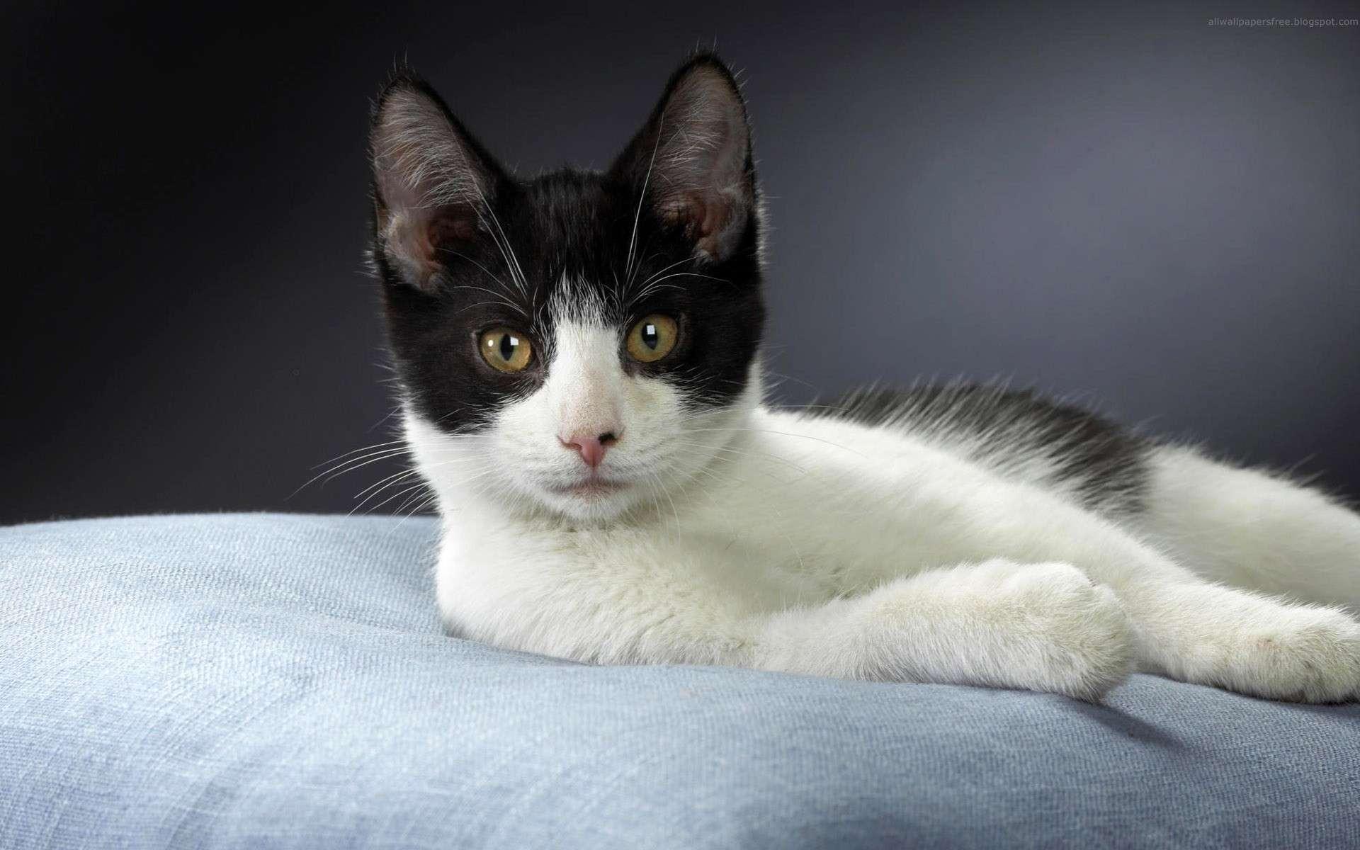 online american chat blanc