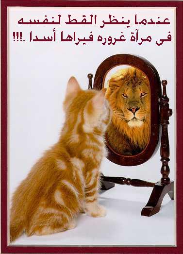 عندما ينظر القط لنفسه مرآة غروره فيراها أسدا