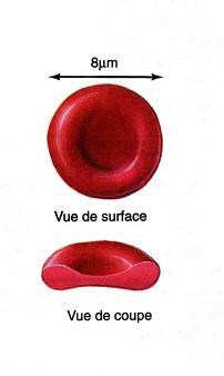 Hématie