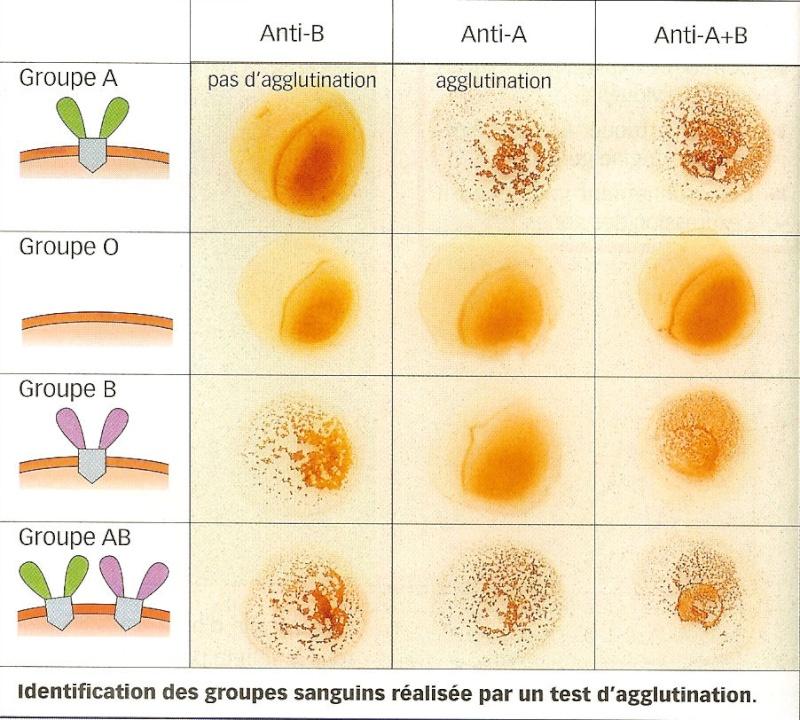 Test agglutination