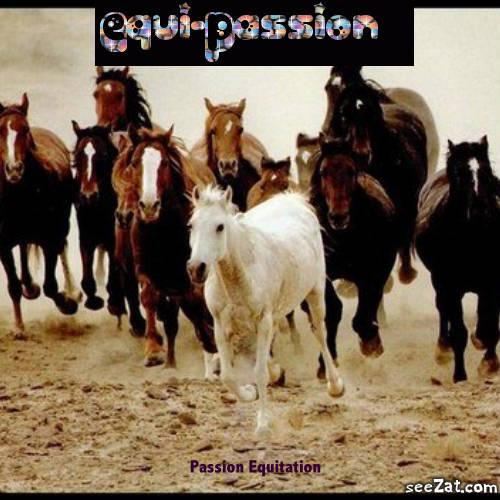 Equi-Passion