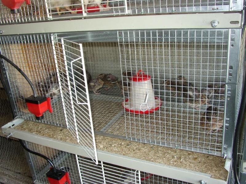 Fabrication une batterie de cages a poussins for Abreuvoir lapin fait maison