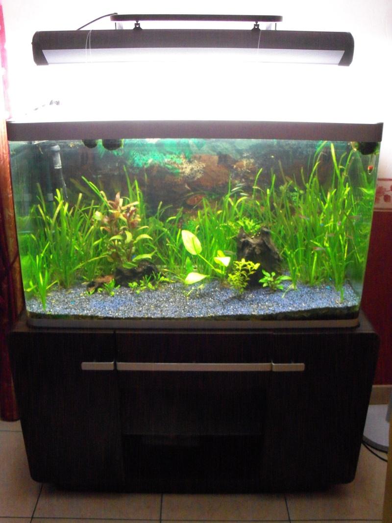 Aquarium osaka 300 litres for Kit bac a poisson