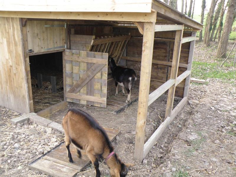 fabriquer une cabane pour une biquette