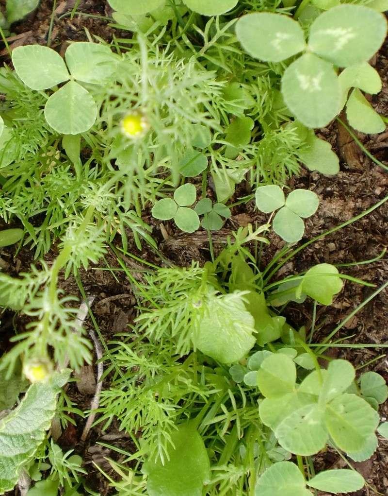 http://i67.servimg.com/u/f67/14/27/41/80/fleurs60.jpg