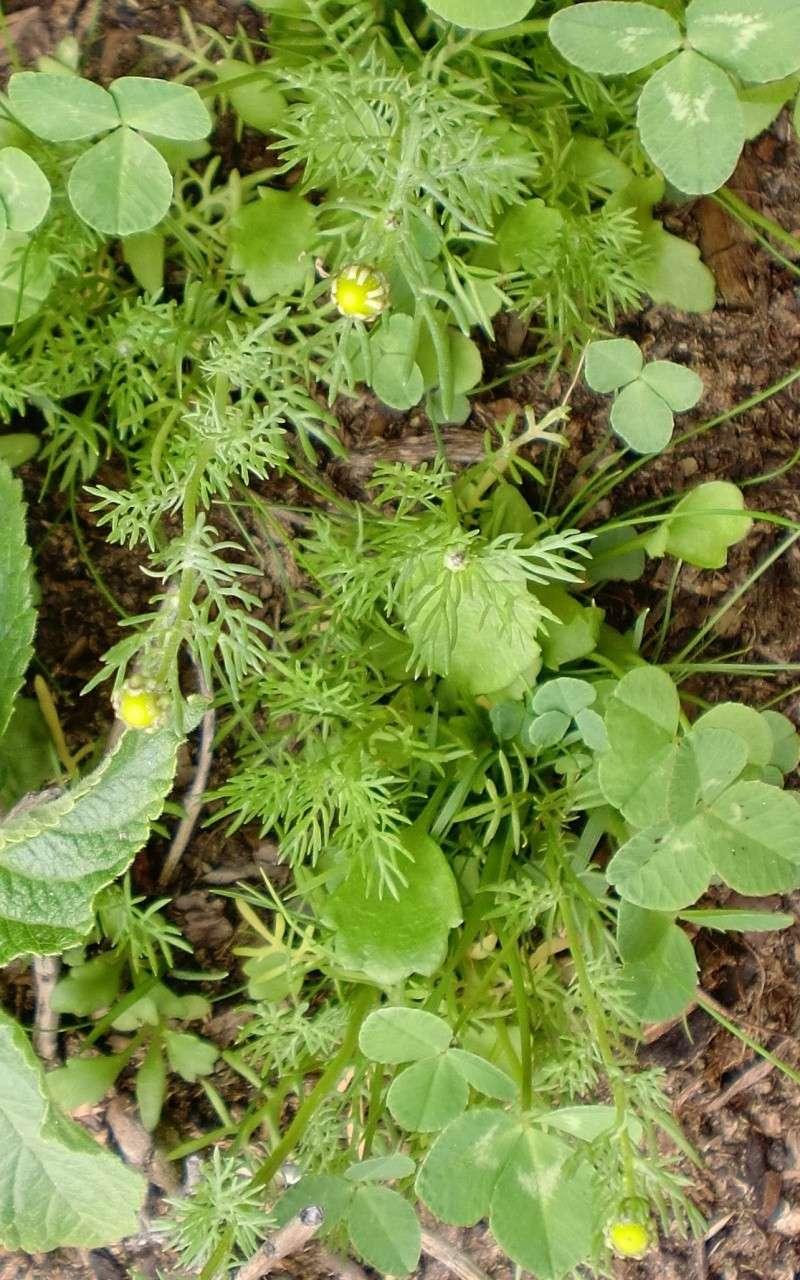 http://i67.servimg.com/u/f67/14/27/41/80/fleurs61.jpg
