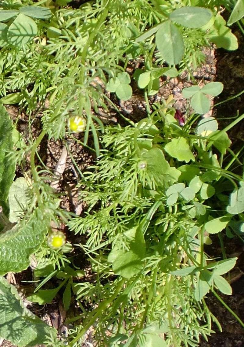 http://i67.servimg.com/u/f67/14/27/41/80/fleurs62.jpg