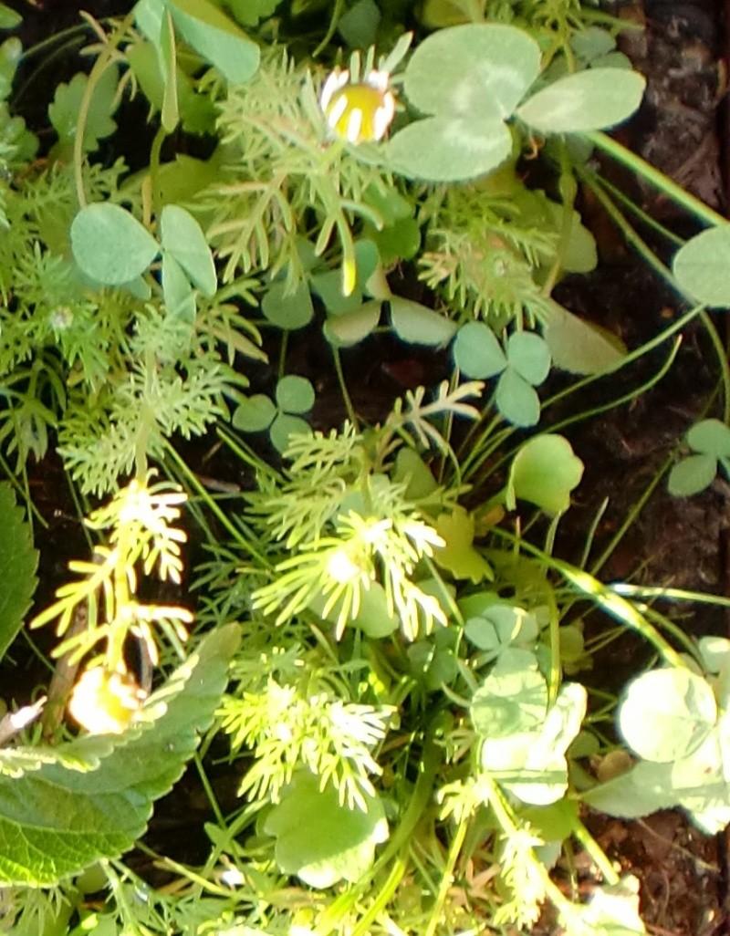 http://i67.servimg.com/u/f67/14/27/41/80/fleurs63.jpg