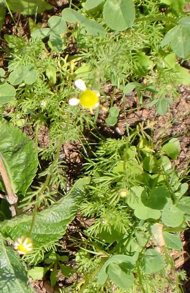 http://i67.servimg.com/u/f67/14/27/41/80/fleurs64.jpg