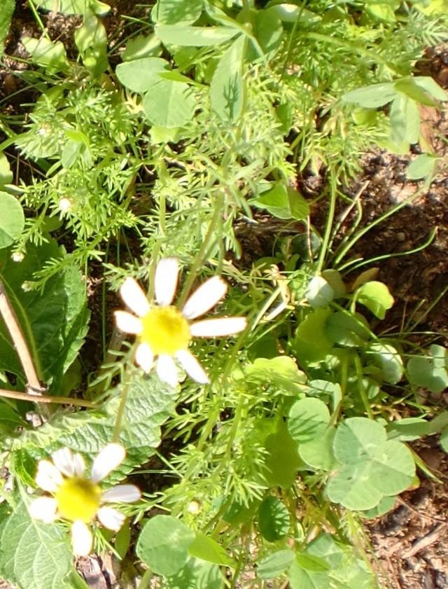 http://i67.servimg.com/u/f67/14/27/41/80/fleurs65.jpg