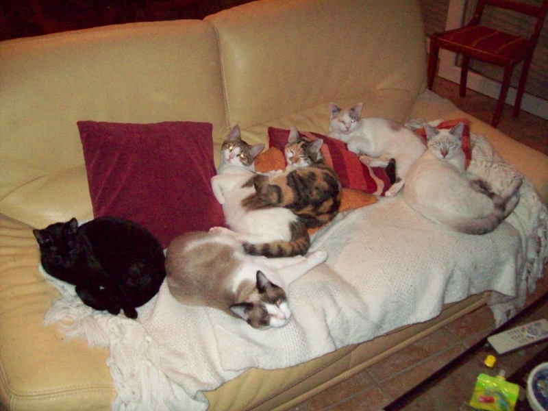 ils saiment! le chat domestique a besoin de son territoire rien que pour lui, se bagarre ceux là dorment ensemble, se font la toilette, sentassent dans