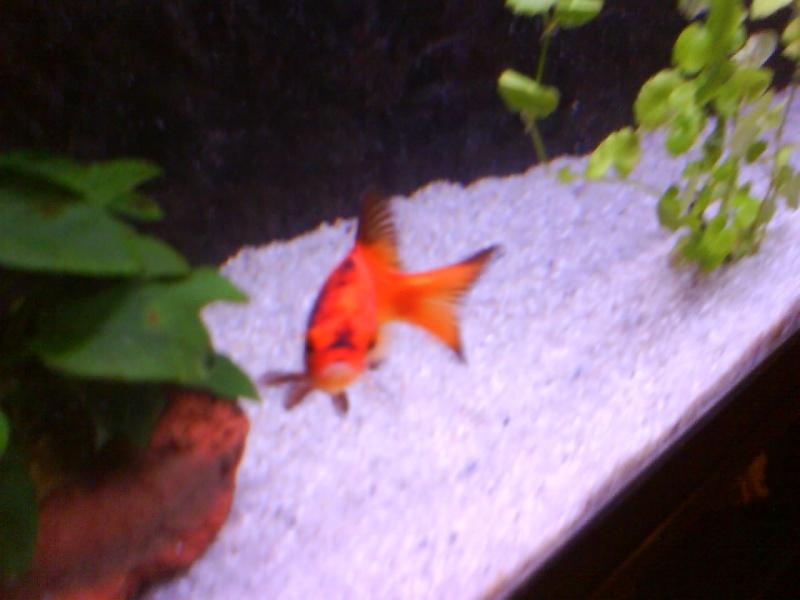 Mon poisson rouge deviens compl tement noire for Filtre poisson rouge