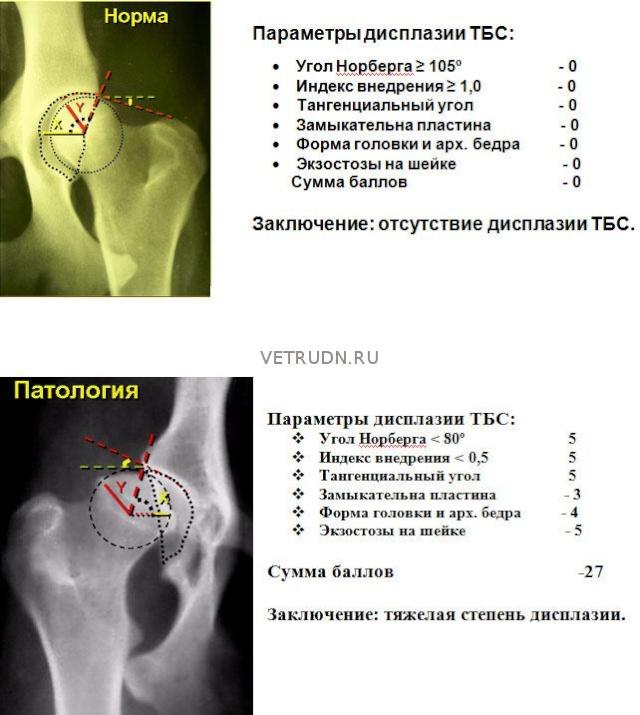 требования ркф при сдаче документов на диагностику дисплазии тазобедренных суставов