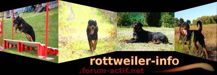 Rottweiler-forum.info