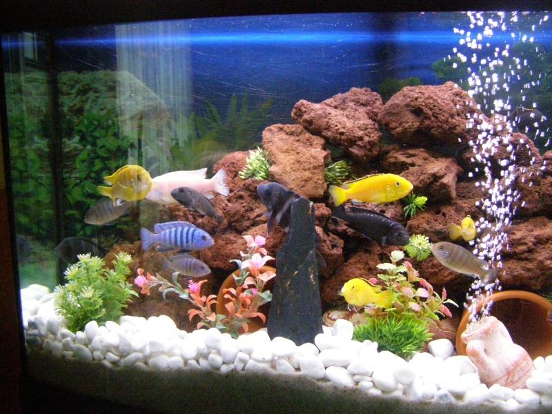 Sable pour aquarium cichlid s malawi d cors pour for Malawi buntbarsch