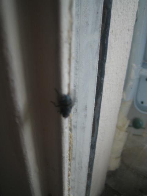 Des mouches de l 39 int rieur for Combattre humidite mur interieur