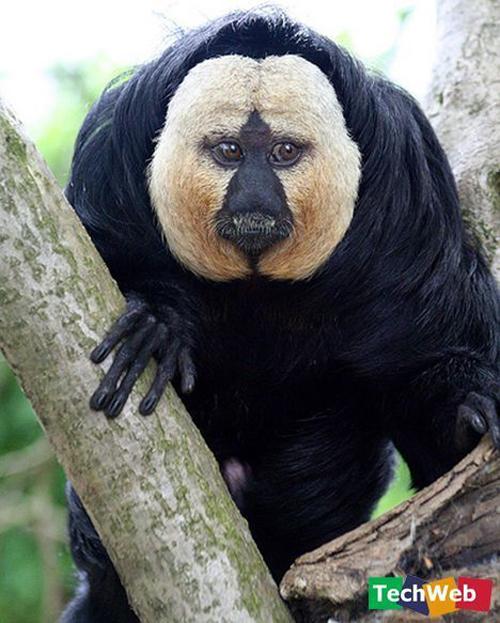 Cube tengok binatang binatang nie nak pelik kan saya sendiri tak