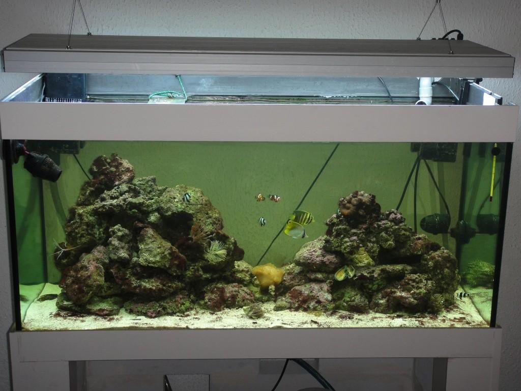 fabrication meuble aquarium siporex. Black Bedroom Furniture Sets. Home Design Ideas