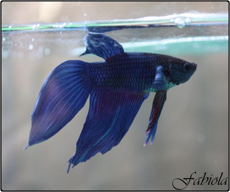 Poisson au fond de l aquarium 28 images mon poisson for Poisson rouge immobile fond aquarium