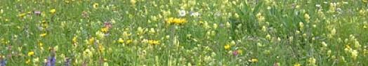 La vallée fleurie