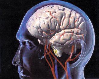 الدماغ يتوضاء اليوم مرات