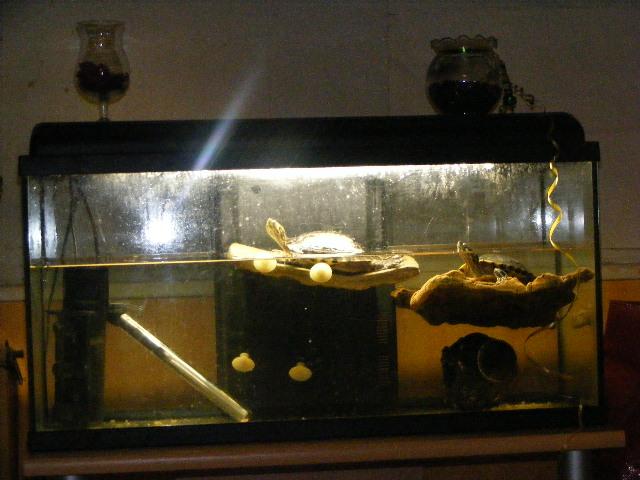 chauffe eau aquarium tortue